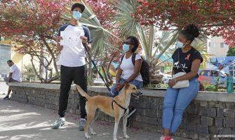 petição que pede justiça para cadela esfaqueada em Alto da Glória